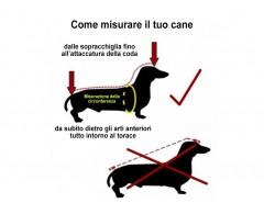 come misurare il tuo cane