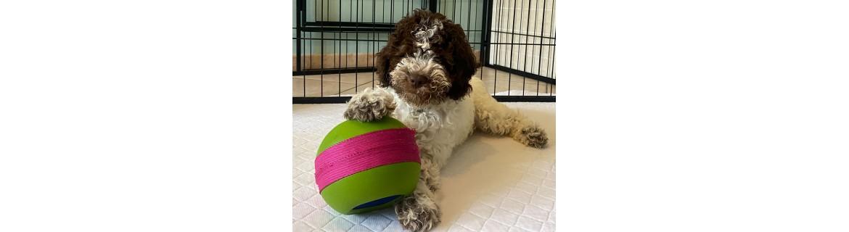 tappetini per cani lavabili e ideali per il trasporto