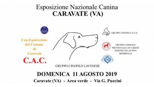 Esposizione nazionale canina CARAVATE (VA)